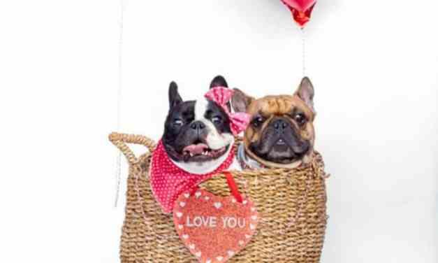 10 casais caninos que comemoraram bastante o Dia dos Namorados