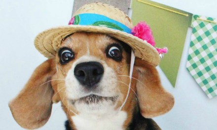 Arraiá Canino: cachorros que mais arrasam no look festa junina