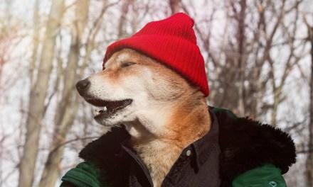 Os melhores looks caninos do Inverno 2017