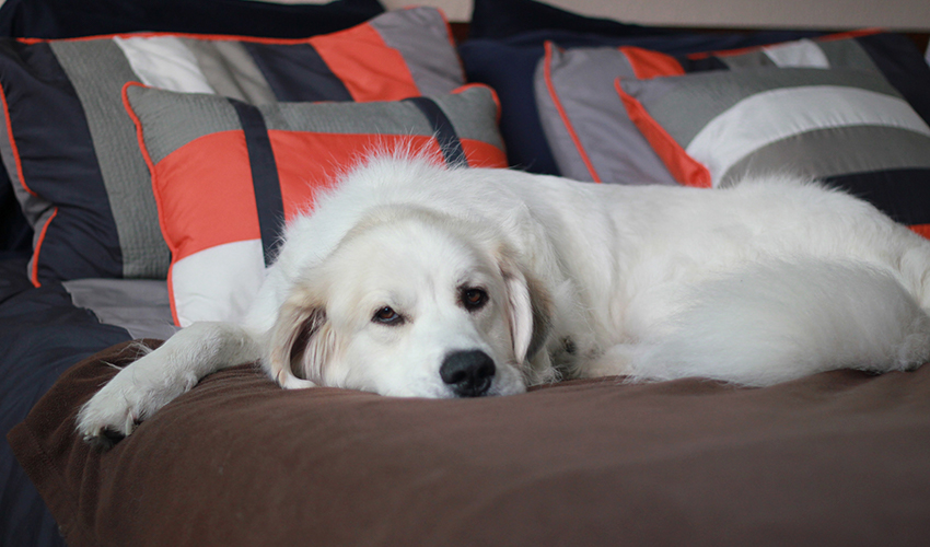 Ansiedade de separação: o cachorro sofre quando você sai de casa?