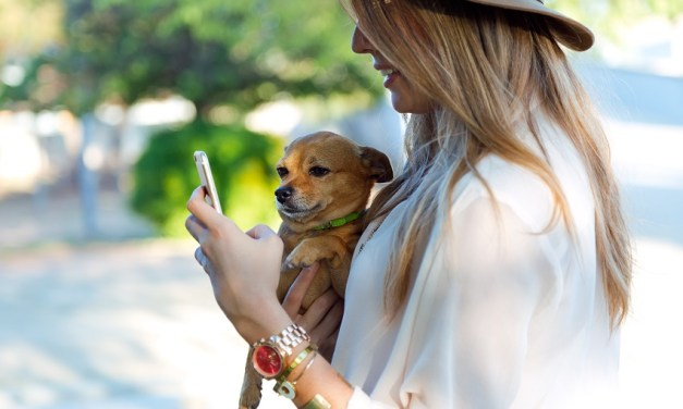 Nova funcionalidade: reportar perfis para a DogHero