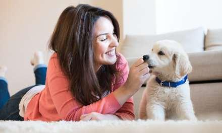 Como dar remédio para o cachorro