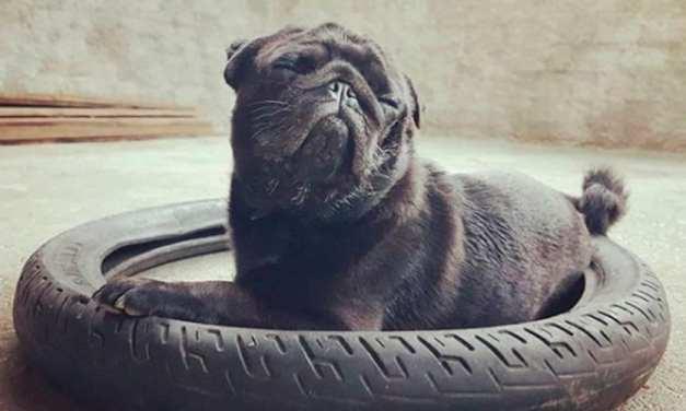 10 fotos de cachorros que mais parecem capa de revista