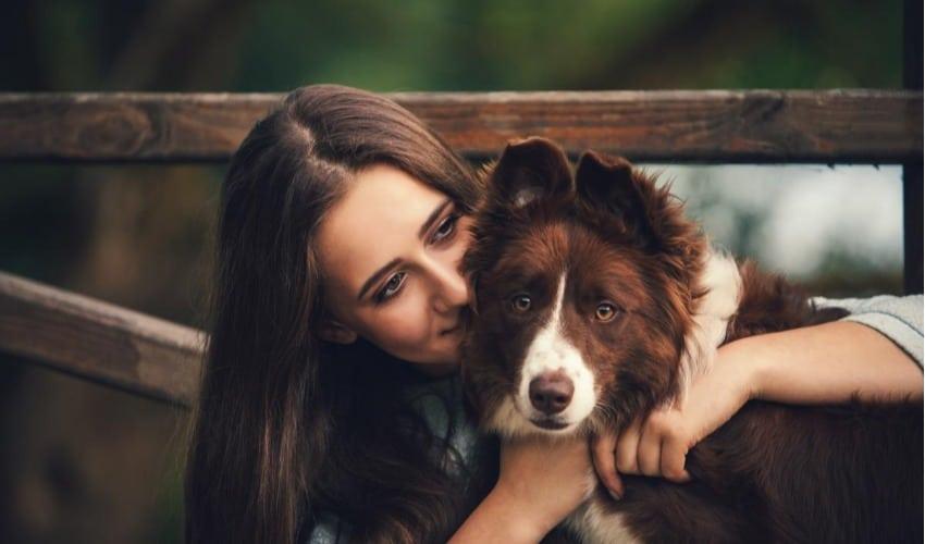 6 perigos para o cãozinho no ano-novo (e como protegê-lo)