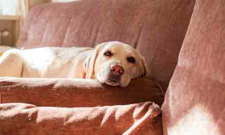 Cachorro com diarreia: o que fazer?