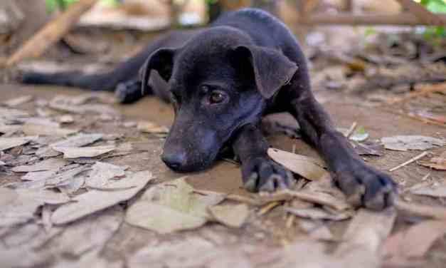 Sarna em cachorro: o que é, sintomas e tratamento