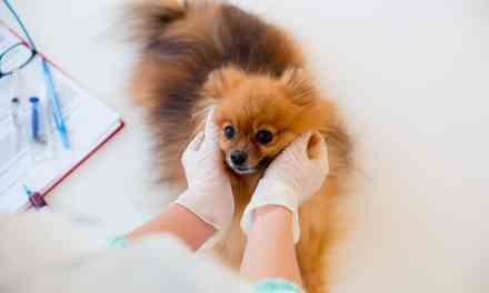 Displasia coxofemoral em cães: o que é, sintomas e tratamento