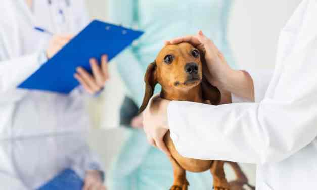Tudo sobre plano de saúde para cachorro