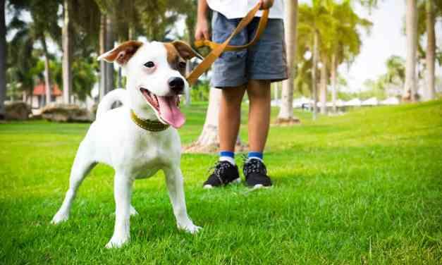 Por que passear com cachorro é importante?