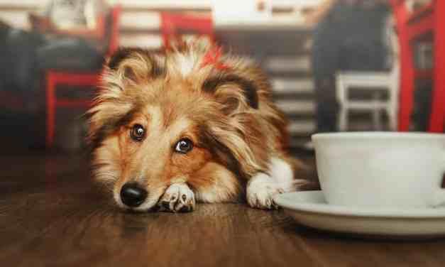 Cachorro assustado: o que fazer?