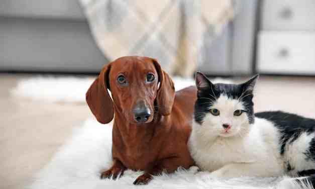 Como acostumar gato e cachorro juntos