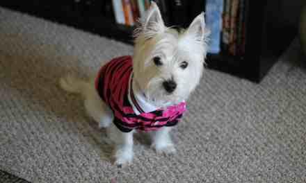 Xixi de cachorro: receitas caseiras e produtos para eliminar o cheiro