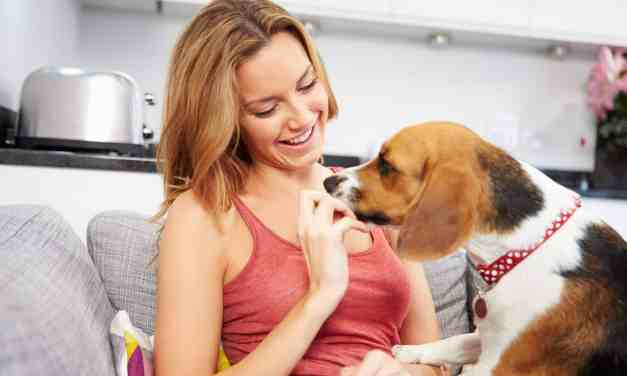 Como dar comprimido para cachorro?