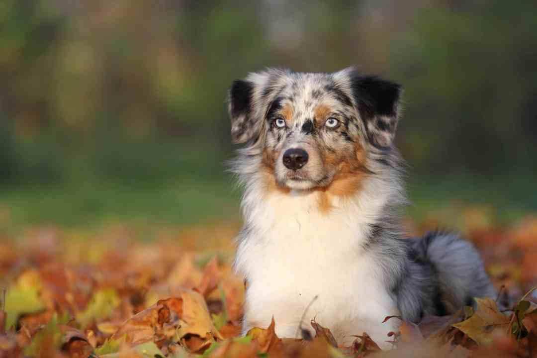 Esses cães são verdadeiros protetores: vão guardar sua família como ninguém!