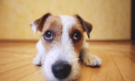 Alergia em cachorro: o que é, sintomas e tratamento