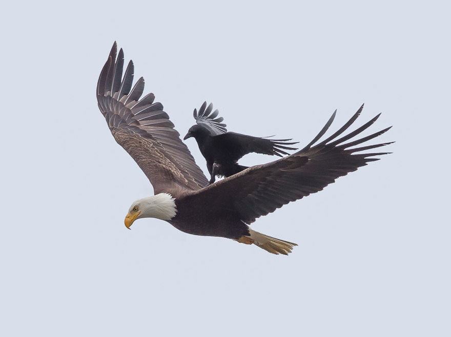 On Eagles' Wings Is How God Delivers His People | Messianic Bible