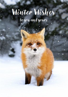 Christmas Card Winter Wishes Snow Fox To You And