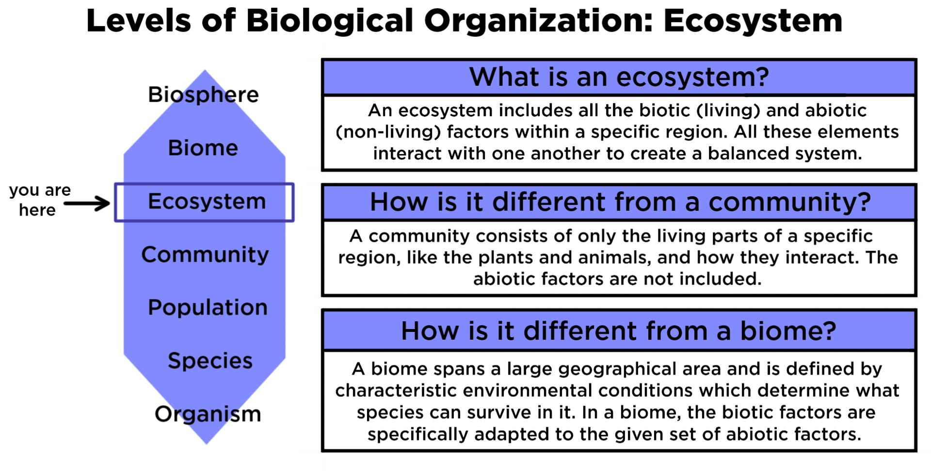Definition Of Ecosystem By Different Authors