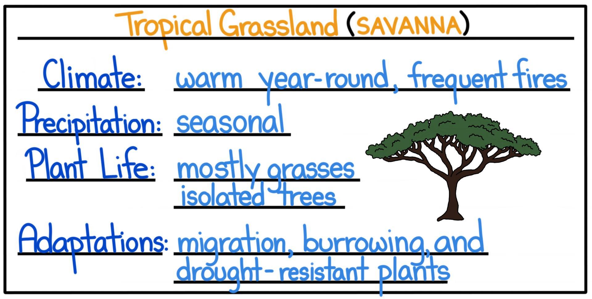 Tropical Biomes Rainforest Dry Forest Amp Savanna
