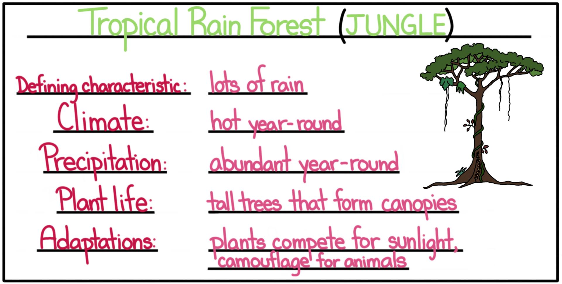 Biomes Tropical
