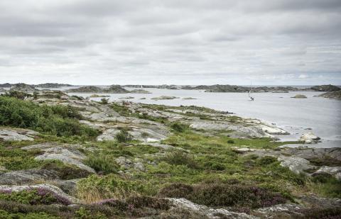 Foto: Mikael Gustafsson/Naturfotograferna/IBL Bildbyrå