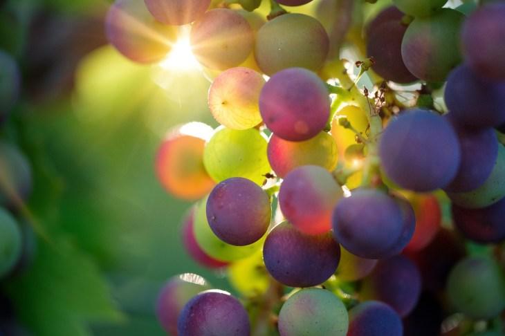 Pinta: ¿Por qué las uvas cambian de color durante el verano ...
