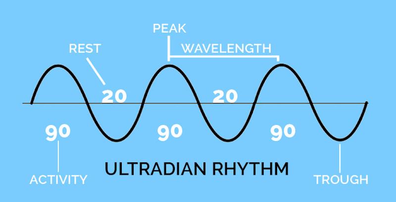 Jam Kerja   Ultradian Rhythm