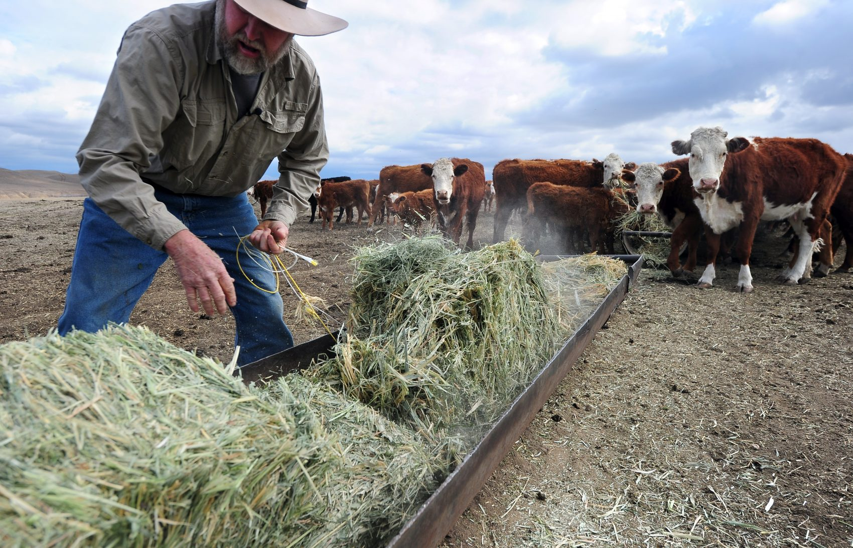 U S Cattle Ranchers Size Up Trump S Beef With Nafta