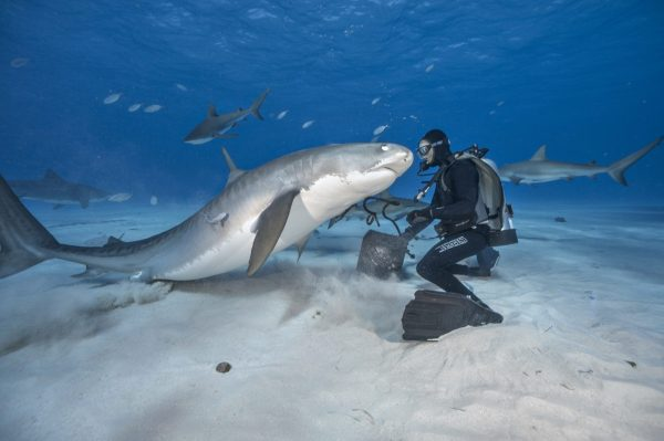 Great White Say Cheese Shark Photographer Gets Up Close
