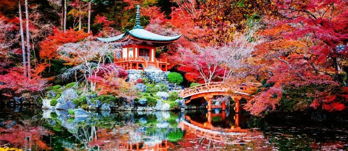 Cherry blossoms in Japan, one of the most romantic honeymoon destination in Asia in Summer