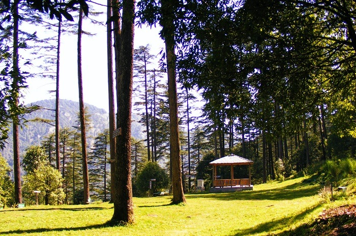 The tree lines in Dhanaulti provide for magical walks and treks in Mussoorie