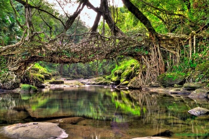 Image result for shillong root bridge
