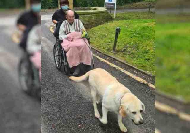 Lawrence e a labradora Milly de novo juntos após 2 anos separados - Foto: reprodução Mirror