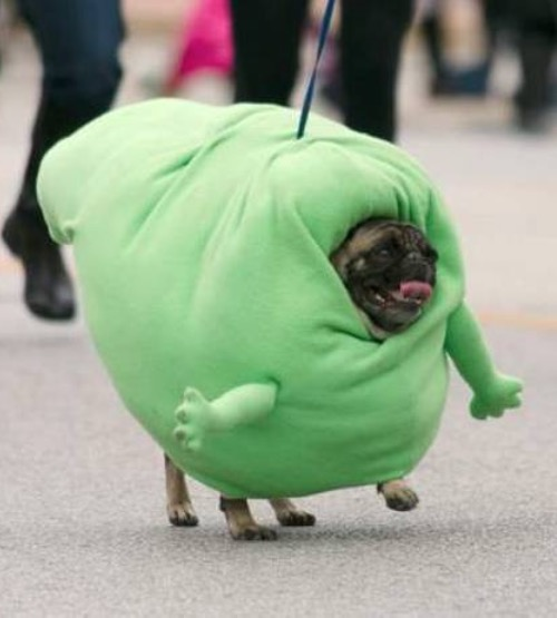Halloween Dog Slimer The Ghost Pug From Ghostbusters