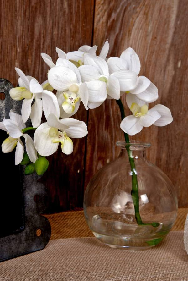 10quot Phalaenopsis Orchid in Glass Vase Cream