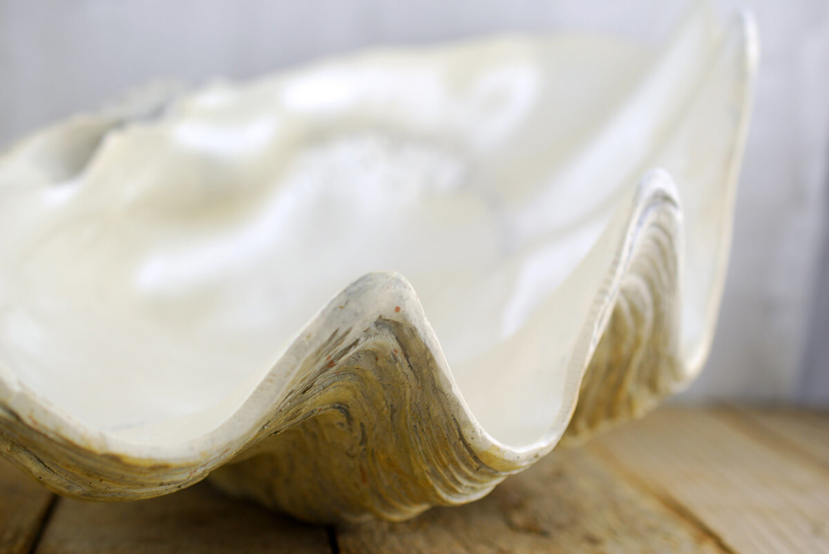 Large Clam Shell Bowl