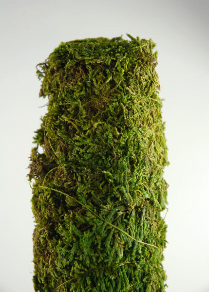 Moss Covered Pole 18 X 2