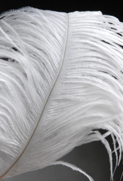 Ostrich Feathers White Wing Tips 10 14 12lb 150 Feathers