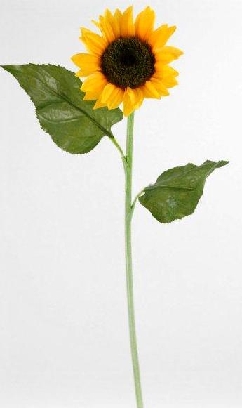 Tall Silk Sunflowers 24in