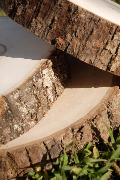 Tree Slices Wood Round 7 9 With Bark Edges