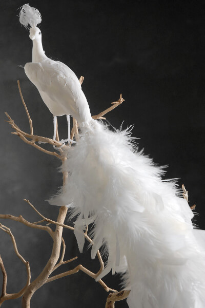 White Feathered Peacocks 17in