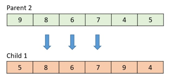 The following diagram shows the final result, with the arrows indicating how the genes were crossed over.