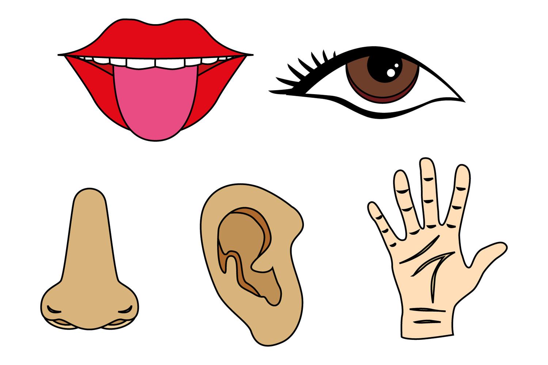Five Senses Clipart Tongue Mouth Nos
