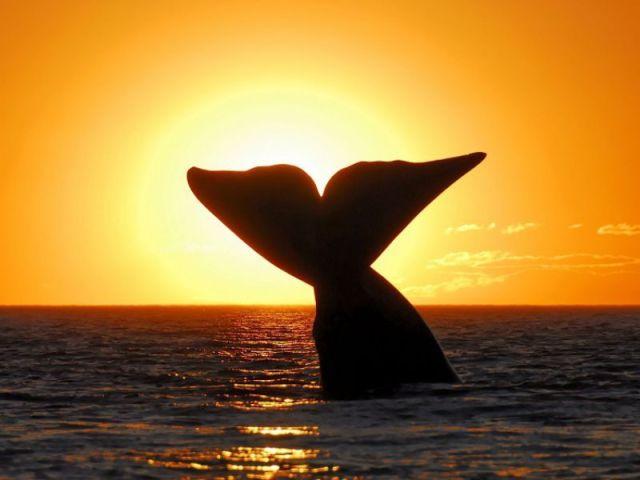 baleine peninsule de Valdes Argentine