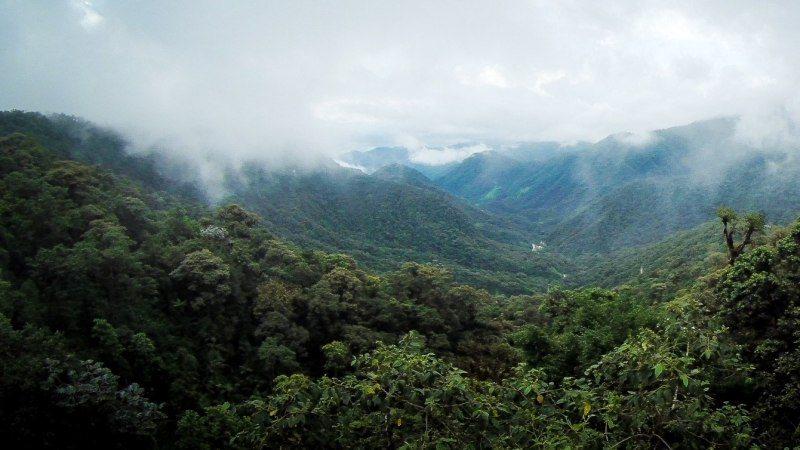 forêt nuageuse Guajalito