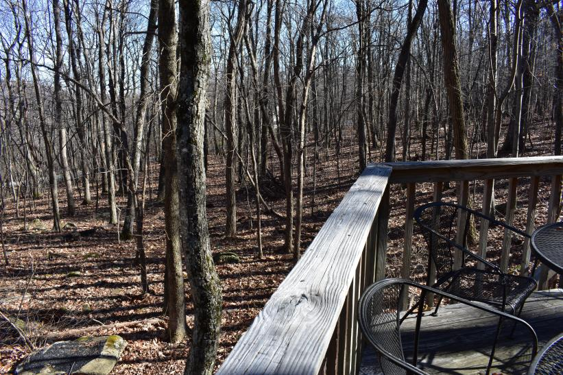 Deck viewing of Forest