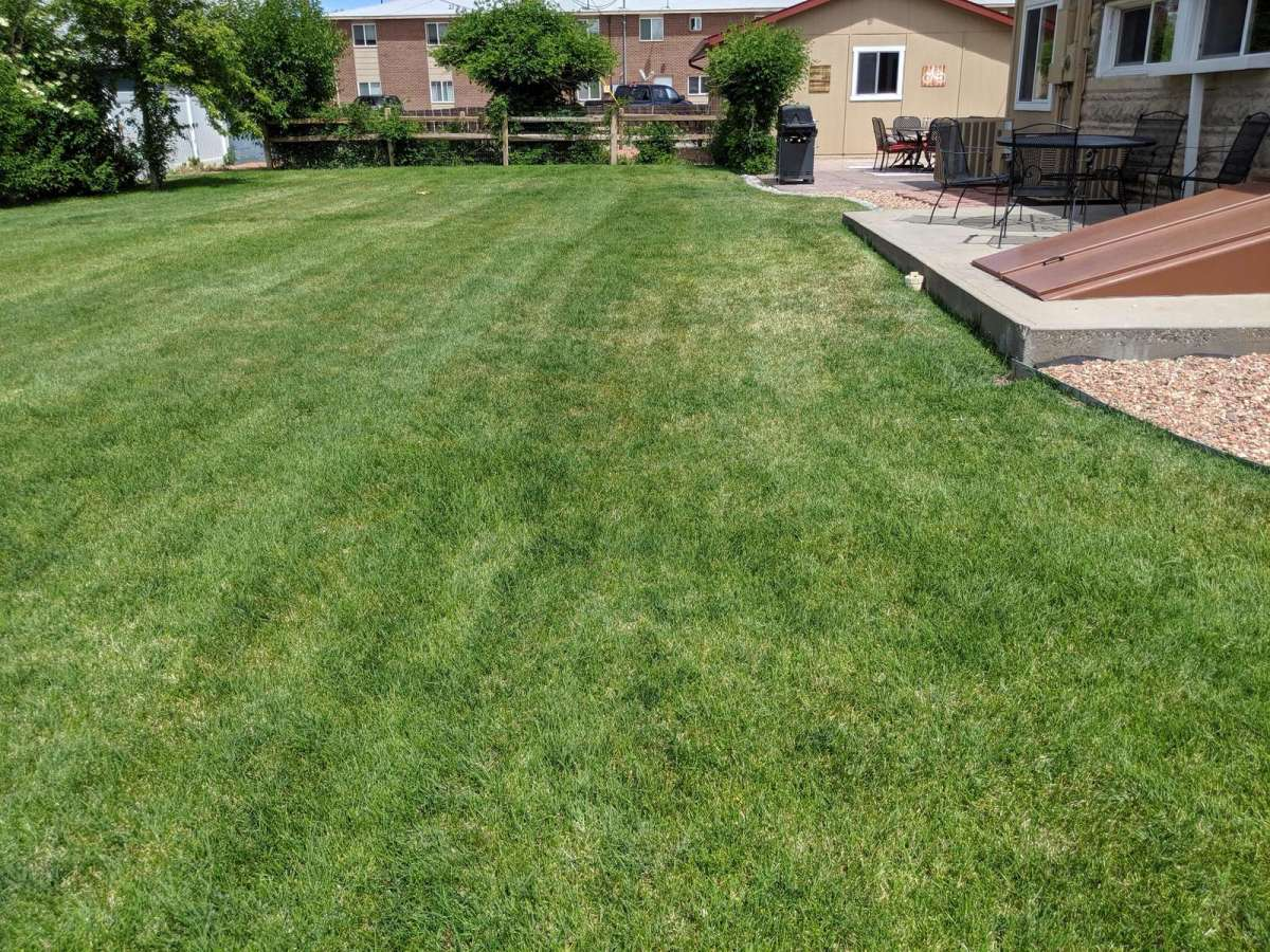 Extra Large well maintained yard