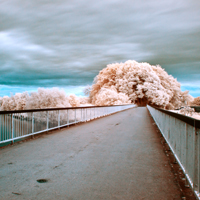 An In-Depth Guide to Infrared Photography: Setup and Capture