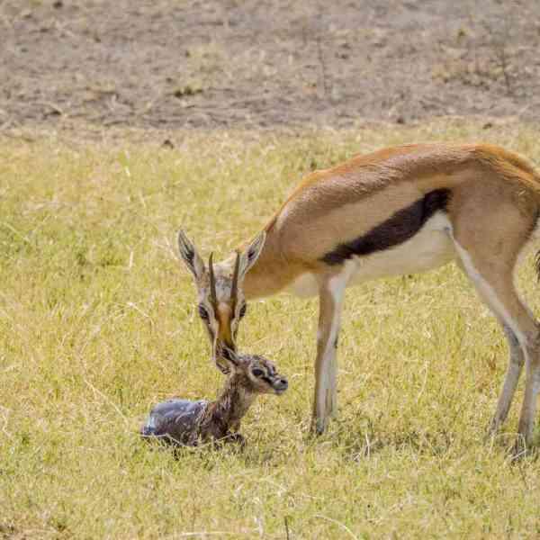 Advantages of Low Season Safaris in Kenya & Tanzania ...