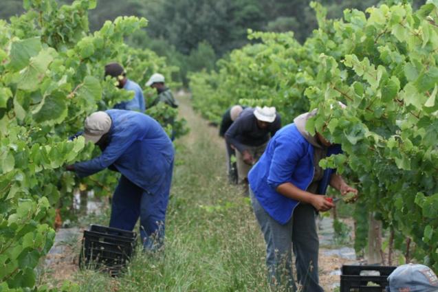 Karnataka Farmers Making Wine In The Name Of Fruit Juices